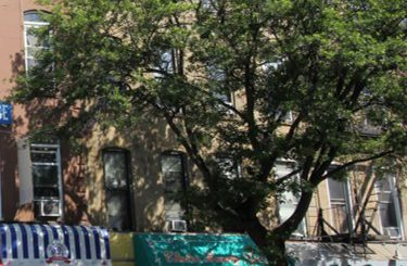 four unit mixed-use building park slope for sale brooklyn terracrg commercial real estate adam hess ofer cohen
